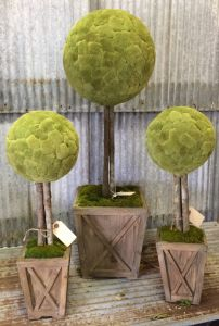 Preserved Cattail Ball Topiary Small